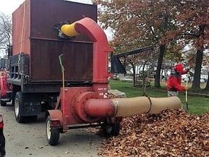 Leaf Collection image3.jpg